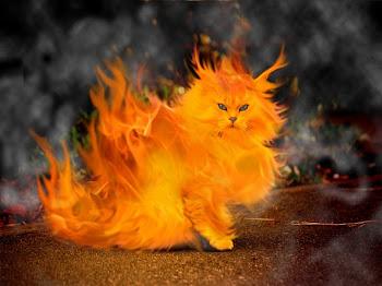 Η φλεγόμενη...γάτος.