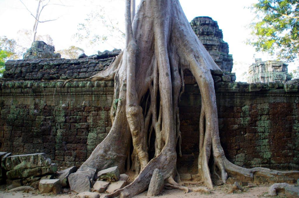 Rhaaaaa ...vive ton énergie - Page 6 Cambodge+-+Siem+Reap-145
