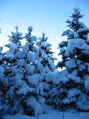 Snow: Think Ski!