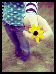 小黄花送给你