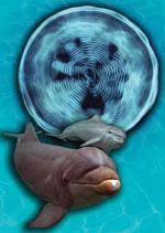 Cymaglyphe des Rufs eines Delfinkalbes and seine Mutter - Blaubeerwald Institut