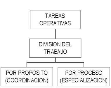 División de tareas operativas: