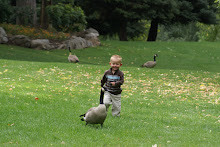 Chasing ducks at the Layton park