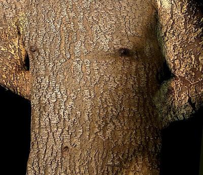 Resultado de imagen para ricardo belmont arbol
