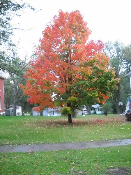 Missouri in the fall