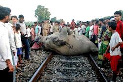 Elephants were killed