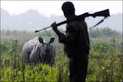 Female rhino shot dead