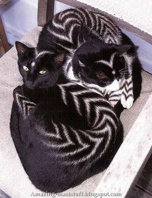 Koleksi Kucing Tercantik