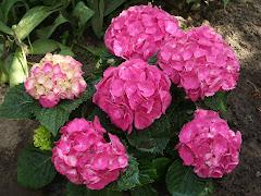 I miei fiori d'estate