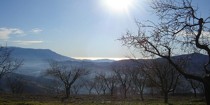 Almond grove with the sea in the background on a January day - foto: casa rural El Paraje