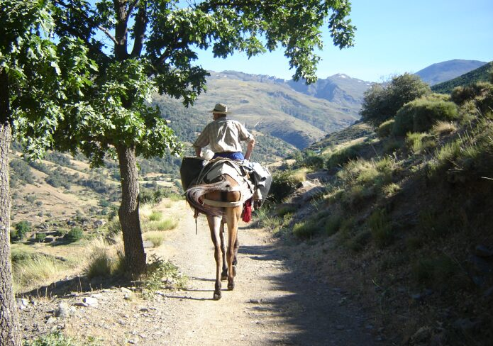 One of the last farmers in the Poqueira valley to go to his farm on muleback - foto: casa rural El Paraje
