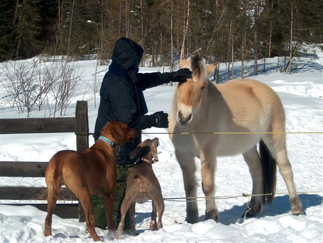 The Puppies and the Horses!