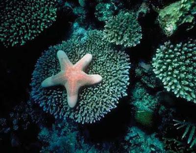 NAMC montessori cosmic education explained philosophy coral reef