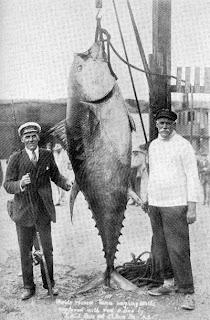 680 lb tuna