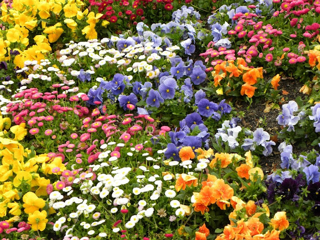Botanic Garden Madrid Demuinck Pardon