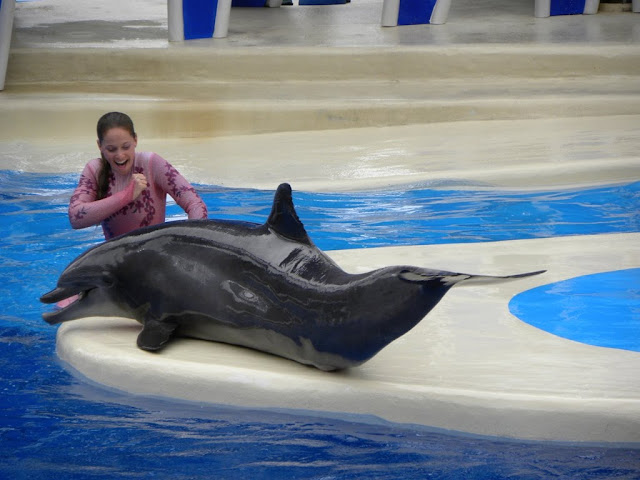 Dolphin Seaworld Orlando