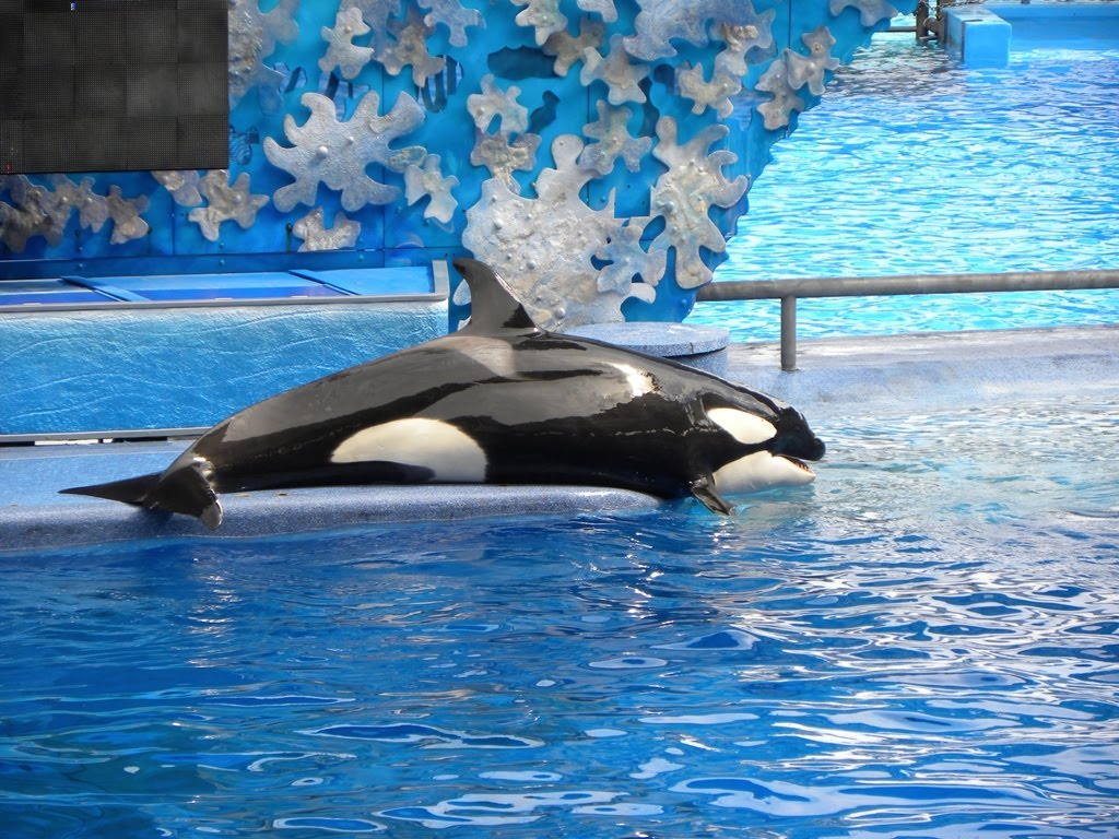 travels ballroom dancing amusement parks shamu and thrills at