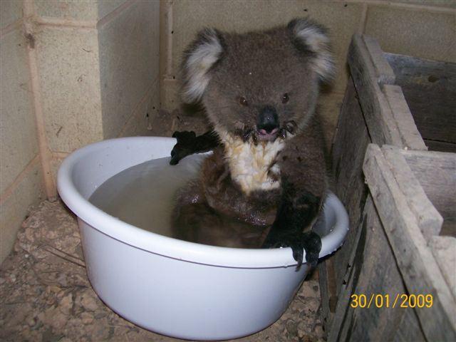 [koala5.htm]