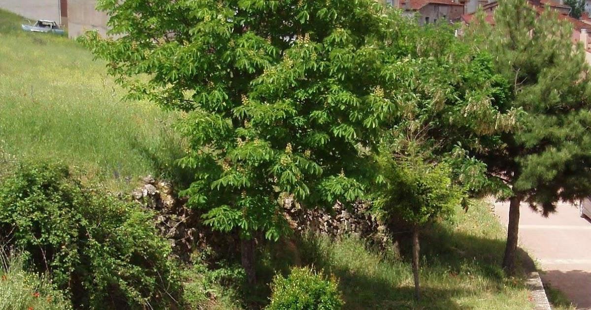 Hitos del rodenal ablanque jardines ganadores i for Jardineria y paisajismo
