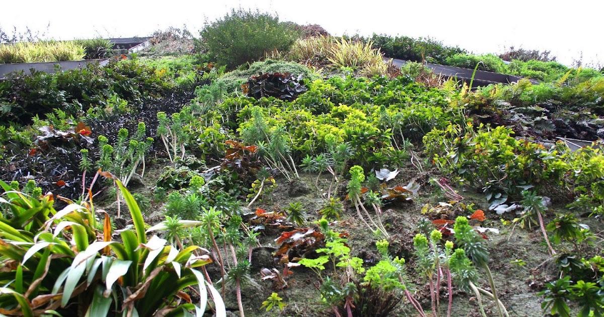 Jardines Verticales De Patrick Blanc Jardiner A Y
