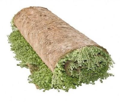 Tepes cubiertas vegetales