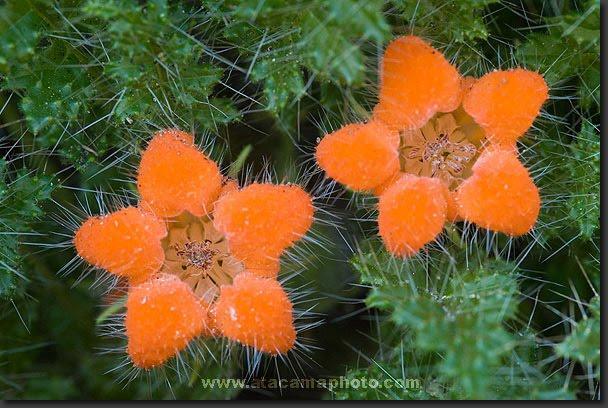 Las flores del desierto ~ Jardinería y Paisajismo (paisajismo