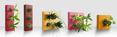 flowerbox españa