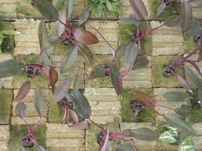Jardineria bioclimatica