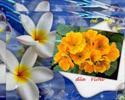 Kwiatki dla Violi