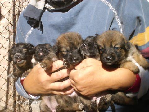 Imagenes de cachorros bebés en adopcion - Imagui