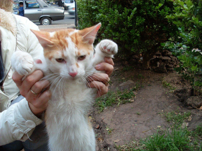 [perseo+gatito+en+adopcion+gratis+octubre+2008]