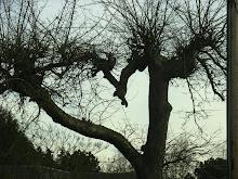 Keating's Tree