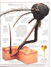 Gigitan Nyamuk