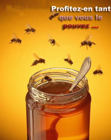 Le silence des abeilles....