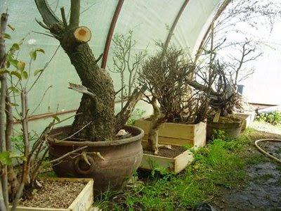 Plantas y flores plantas especies cuidado de plantas en jardines - Cuidado de jardines ...