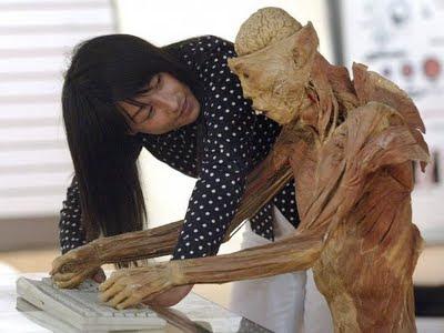organos humanos