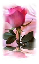 Roses de ternura
