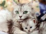 Una mirada dice más que cien palabras