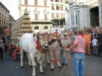 "The ""Mad"" oxcart in Florence"