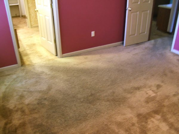 Carpet upholstery cleaning advice carpet premature for Best wearing carpet for high traffic areas