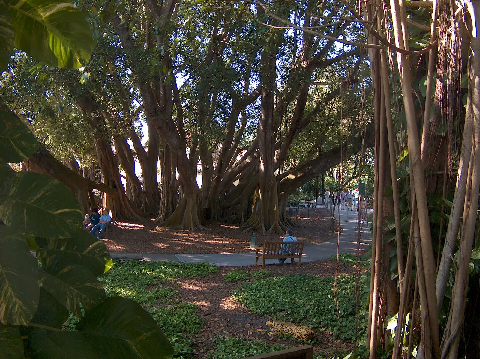 J Ross Artistic Designs Jrad Marie Selby Botanical Gardens