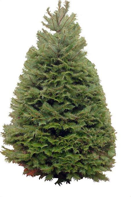 [christmas+tree]