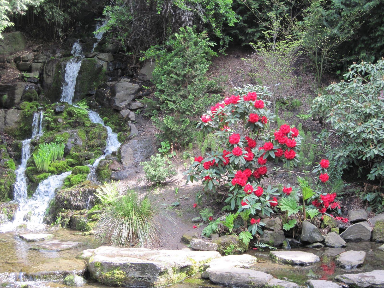 The Schramm Journey Crystal Springs Rhododendron Gardens