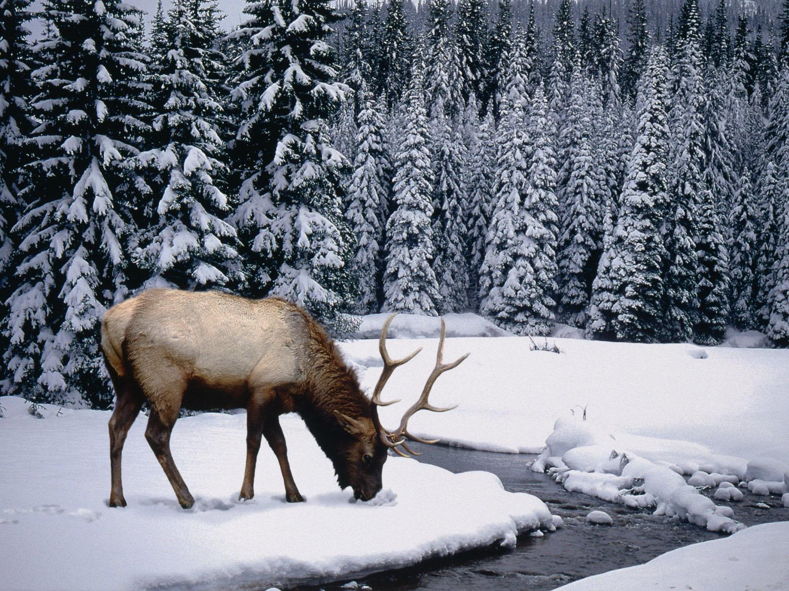 http://1.bp.blogspot.com/_WtHa9sBZPyM/TU_znhdHABI/AAAAAAAAAH0/cJPhcUiIzwk/s1600/iarn%25C4%2583-cerb-wallpapers_1277_1600x1200.jpg