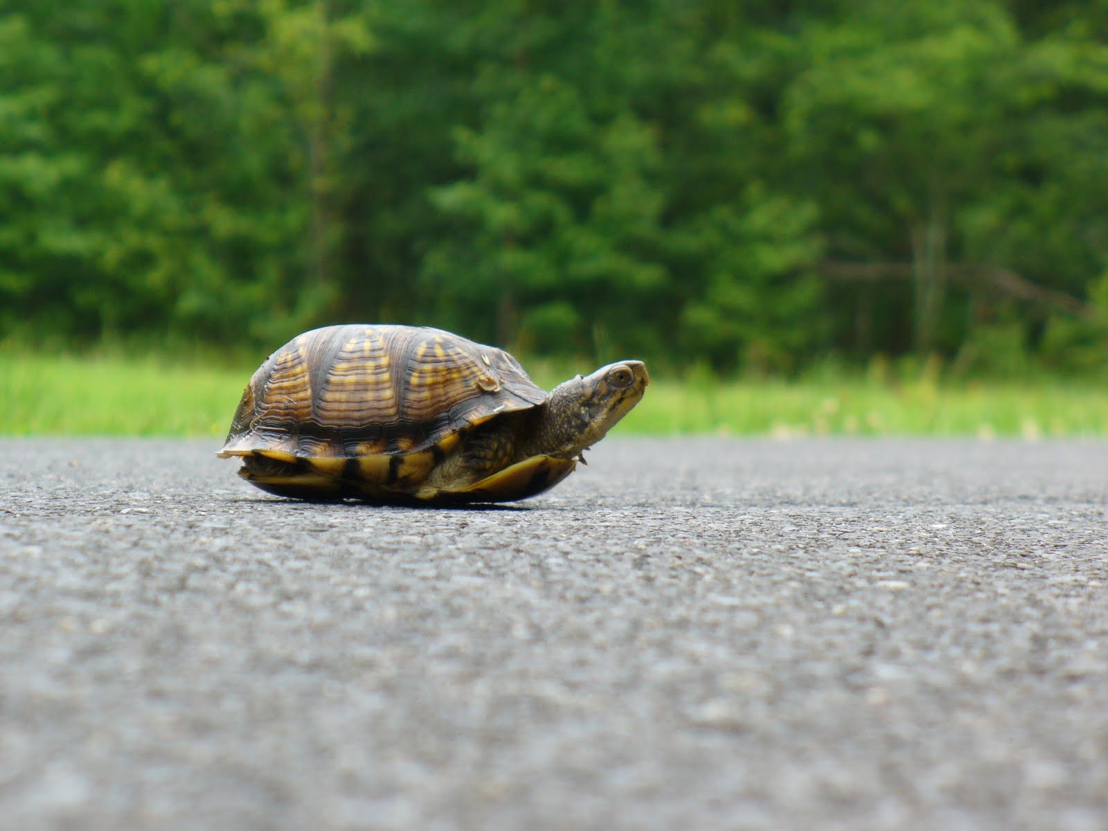 Сколько живут черепахи в домашних 71