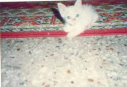 Trixie , from a dying kitten to a beauty.(1995)