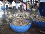 Fish Auctioning at Malpe port(5 kms from Udipi).