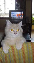 """Matata"" a ""Telivision kitten"""