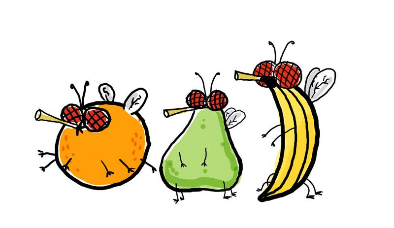 grilled fruit fruit flies