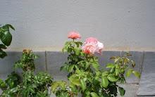 La flor de Cecilia.